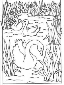 Realistic Swan Coloring Pages