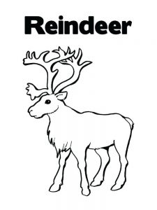 Reindeer Coloring Page Template