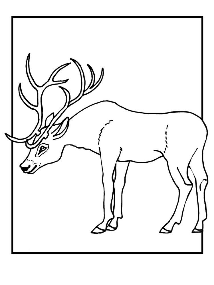 Reindeer Face Coloring Pages