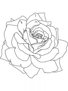 Rose Coloring Pages For Preschool