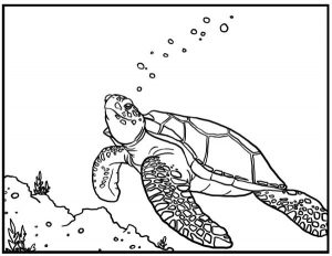 Sea Turtle Coloring Sheet