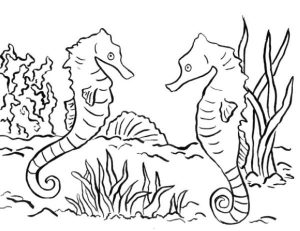 Seahorse In the Sea coloring page