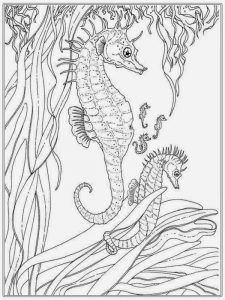 Seahorse under the sea coloring pages for adult