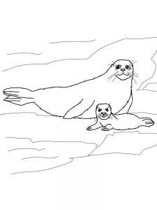 Seal Animal Coloring Pages