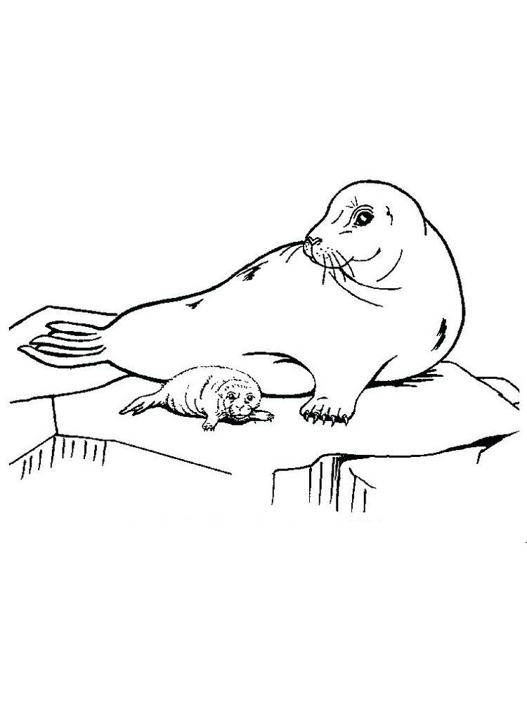 Seal Christmas Coloring Pages