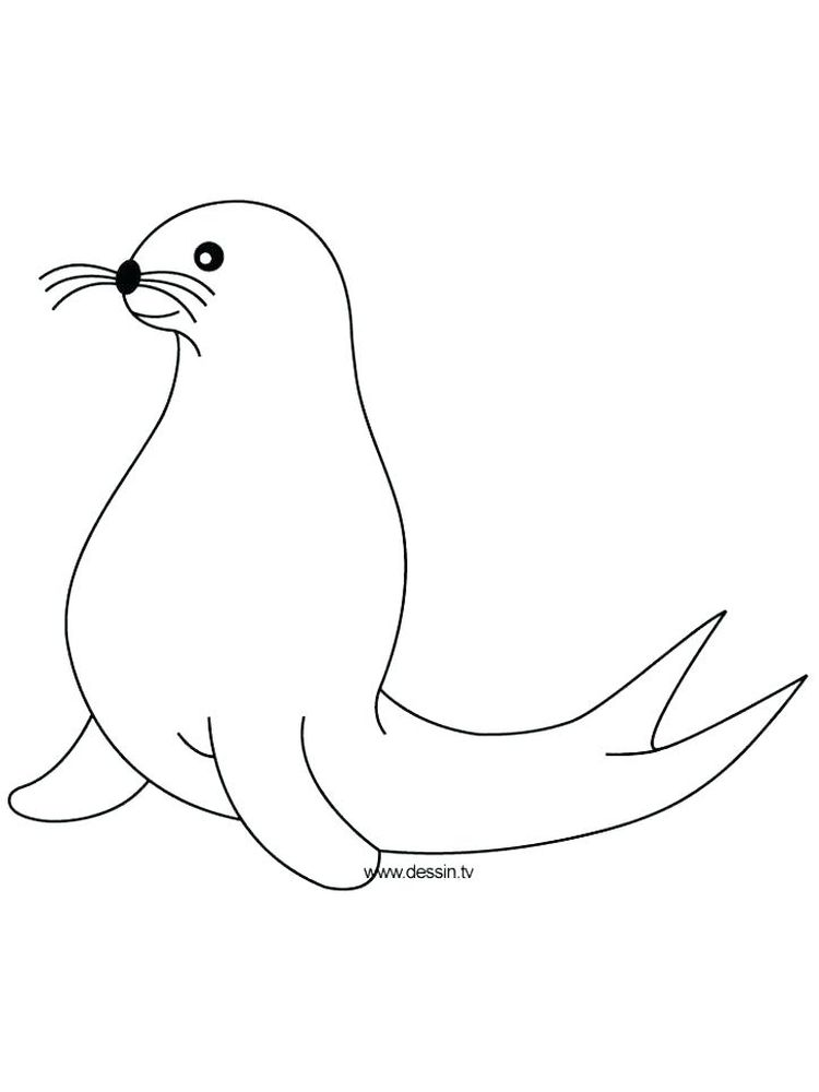 Seal Coloring Pages For Adults