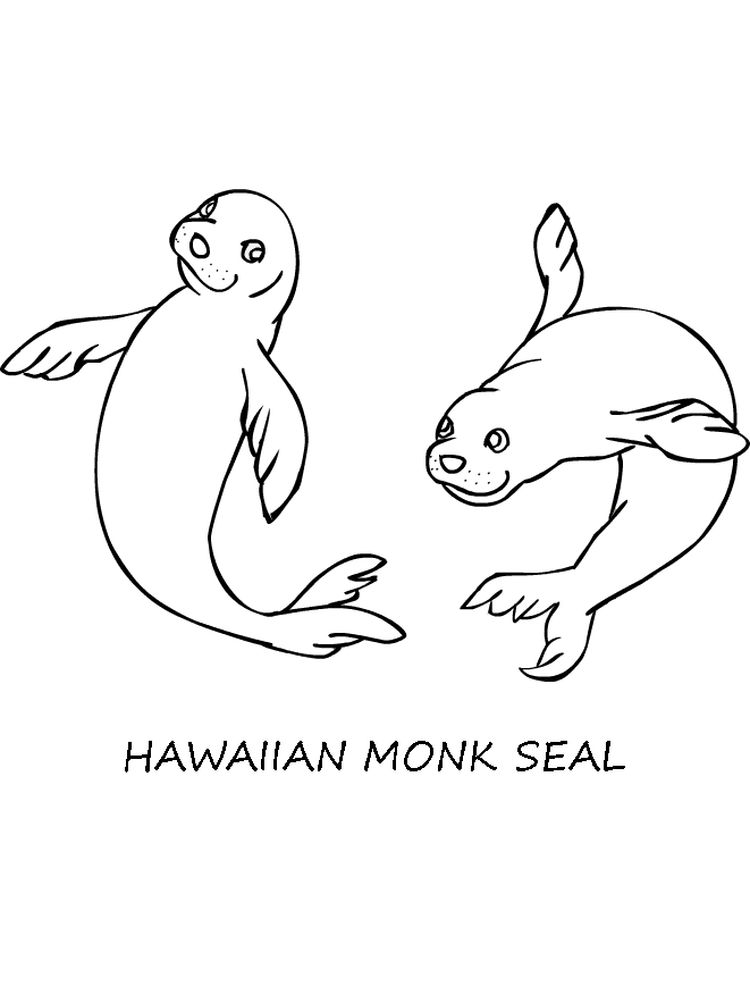 Seal Colouring Pages Free