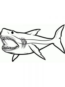 Shark And Dolphin Coloring Pages