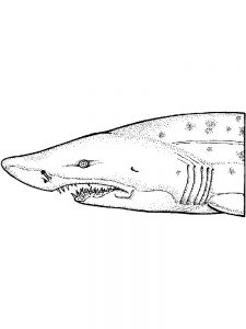 Shark Attack Coloring Pages