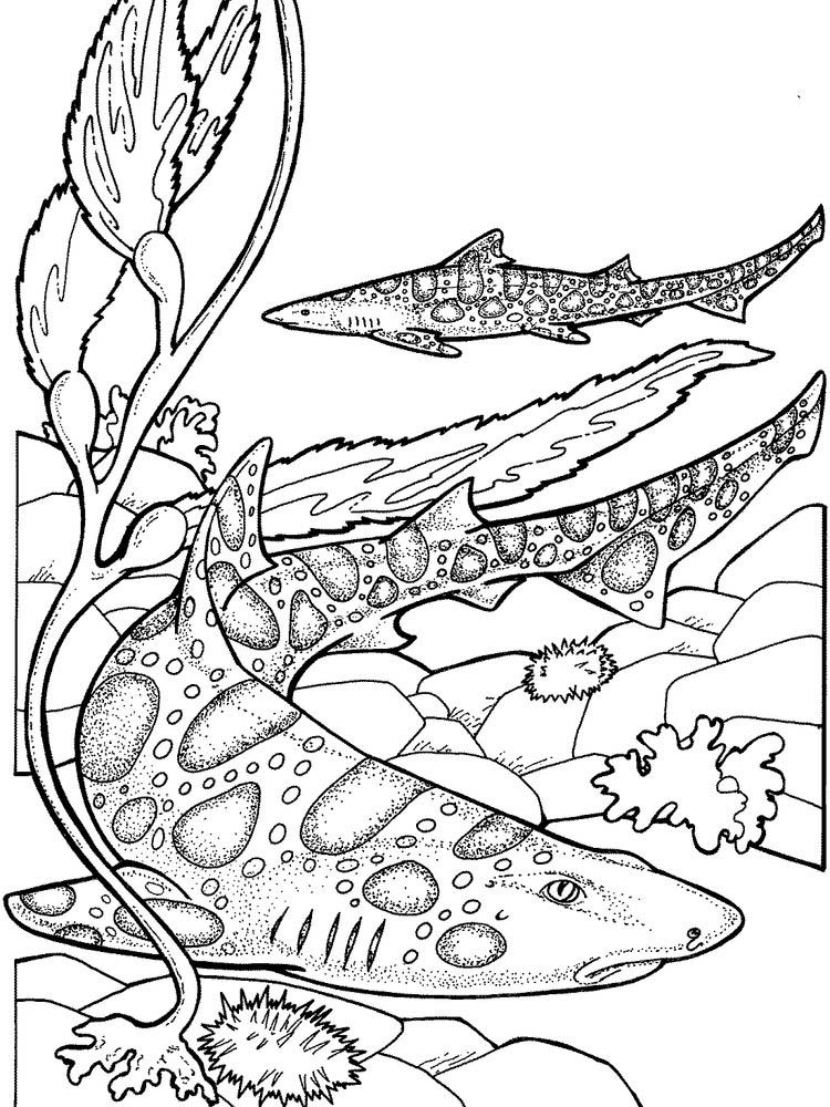 Shark Coloring Book Pictures