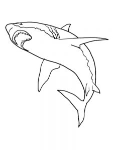 Shark Coloring Pages Crayola