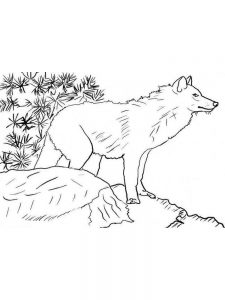 Sheep And Wolves Coloring Pages 1