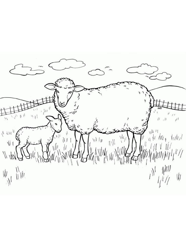 Sheep And Wolves Coloring Pages