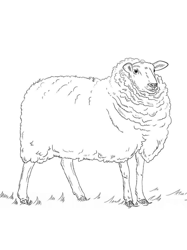 Sheep Art Coloring Pages