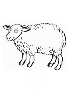 Sheep Coloring Book Pages