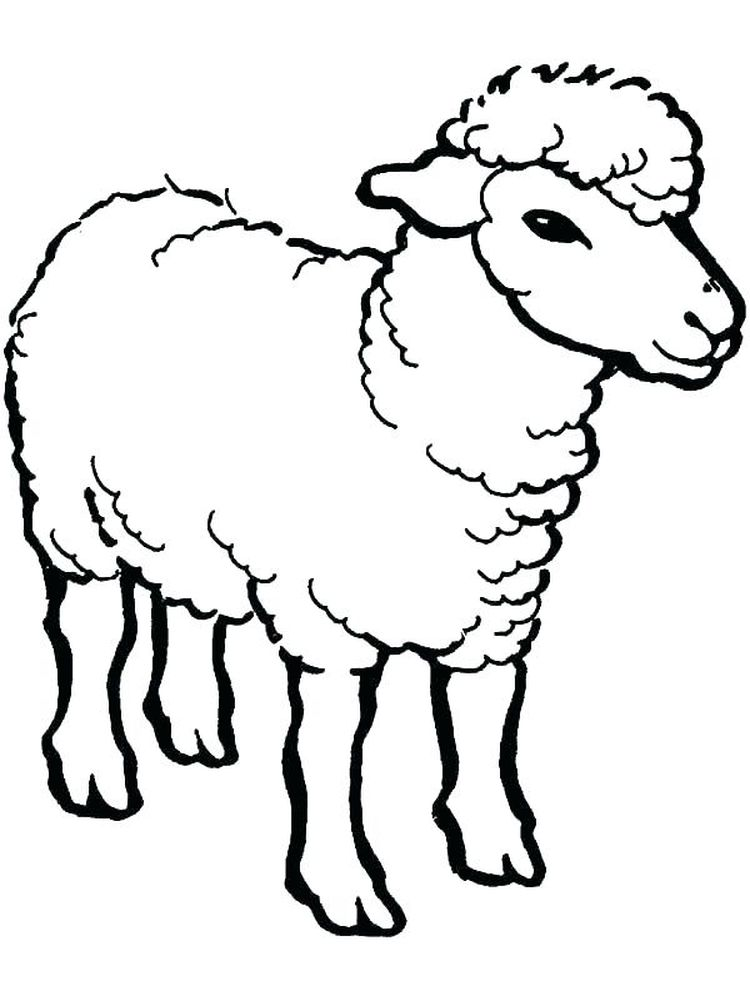 Sheep Coloring Pages Free
