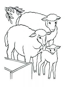 Sheep Coloring Pages Preschool