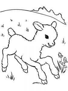Sheepdog Coloring Pages