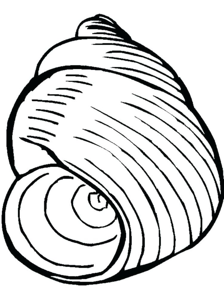 Shell Coloring Page Pdf