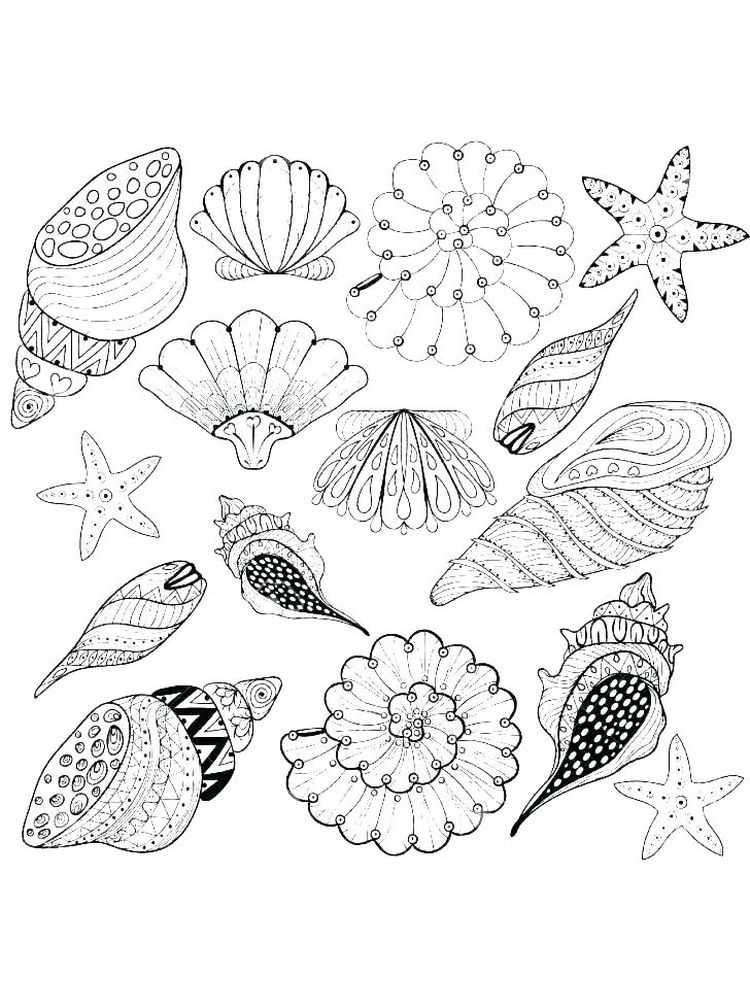 Shell Coloring Page Pictures