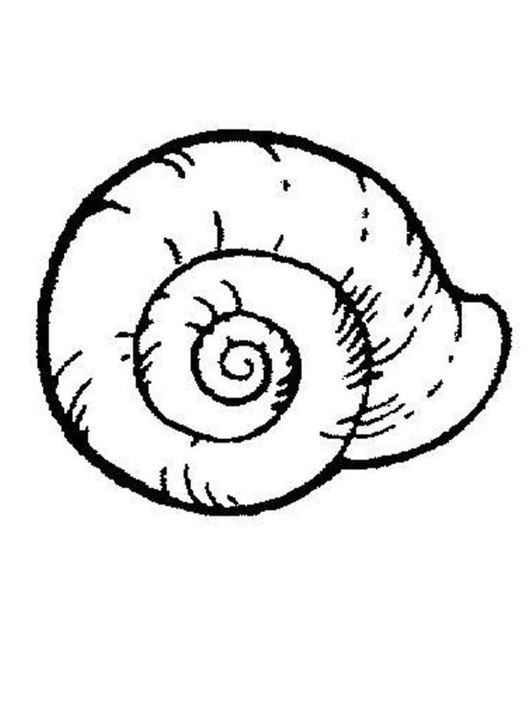 Shell Coloring Pages Free