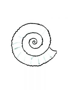 Shell Coloring Pages Preschool