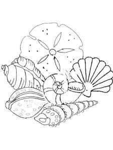 Shell Coloring Pages Printable