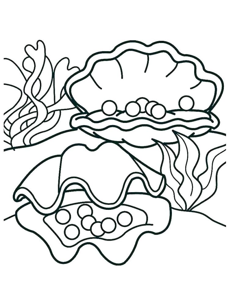 Shell Coloring Pages