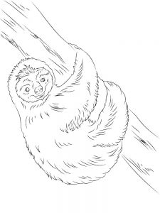 Sloth Coloring Page Easy