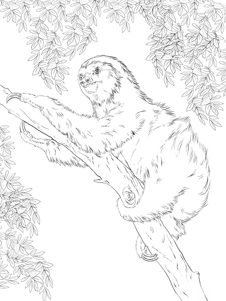Sloth Coloring Page Free