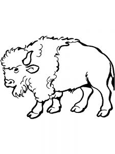 Small Buffalo Coloring Pages