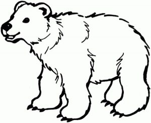 Smile polar bear coloring pages