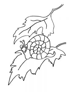 Snail Coloring Pages Printable