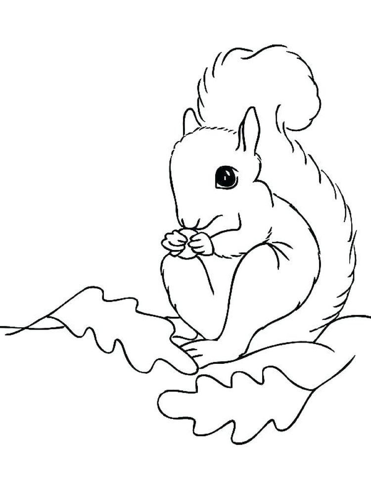 Squirrel Coloring Pages For Kid
