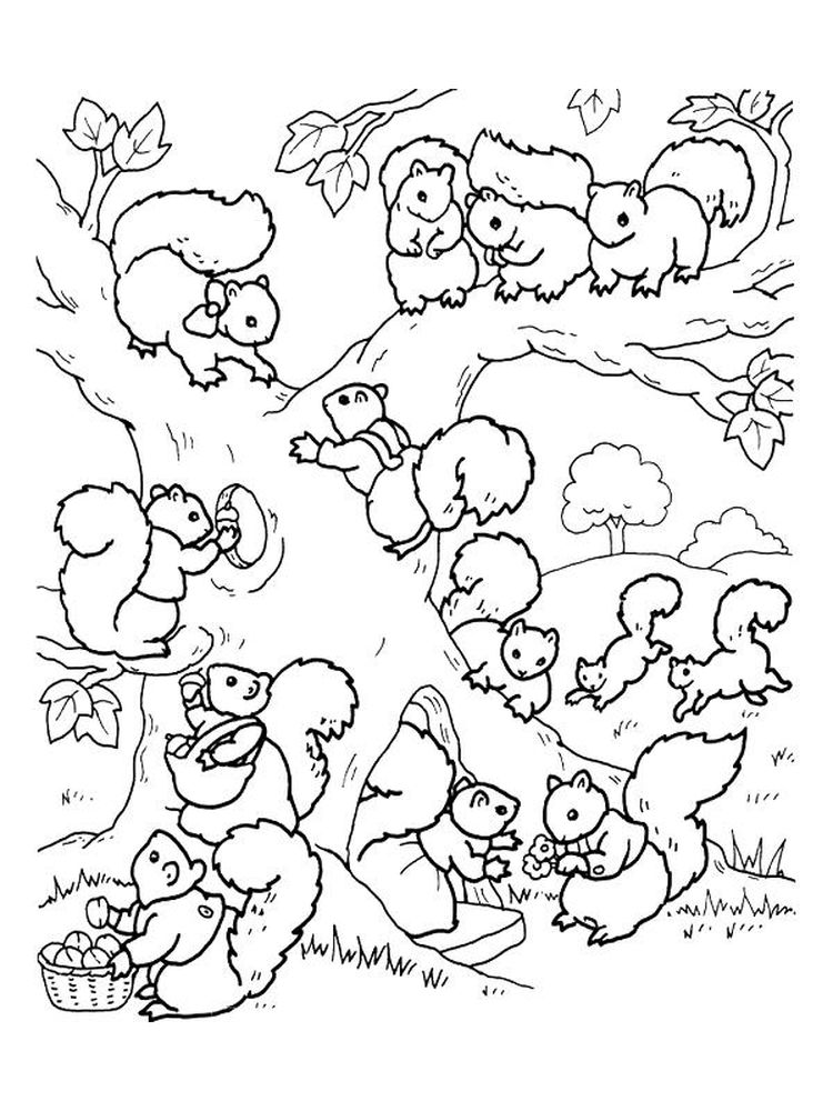 Squirrel Coloring Pages For Preschool