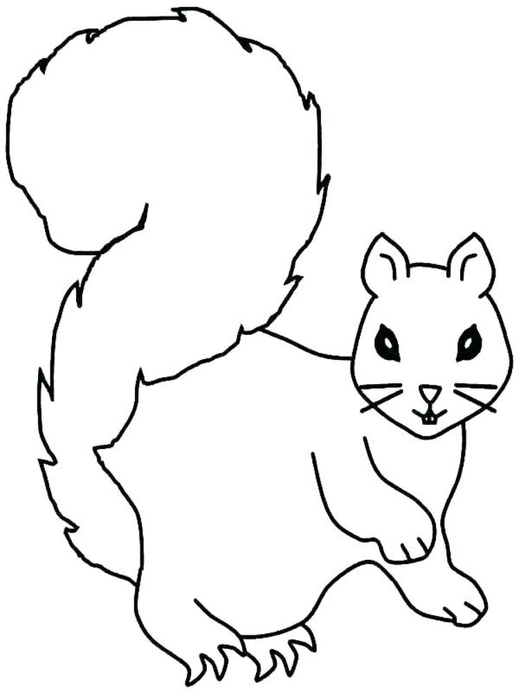 Squirrel Coloring Pages Free Printable