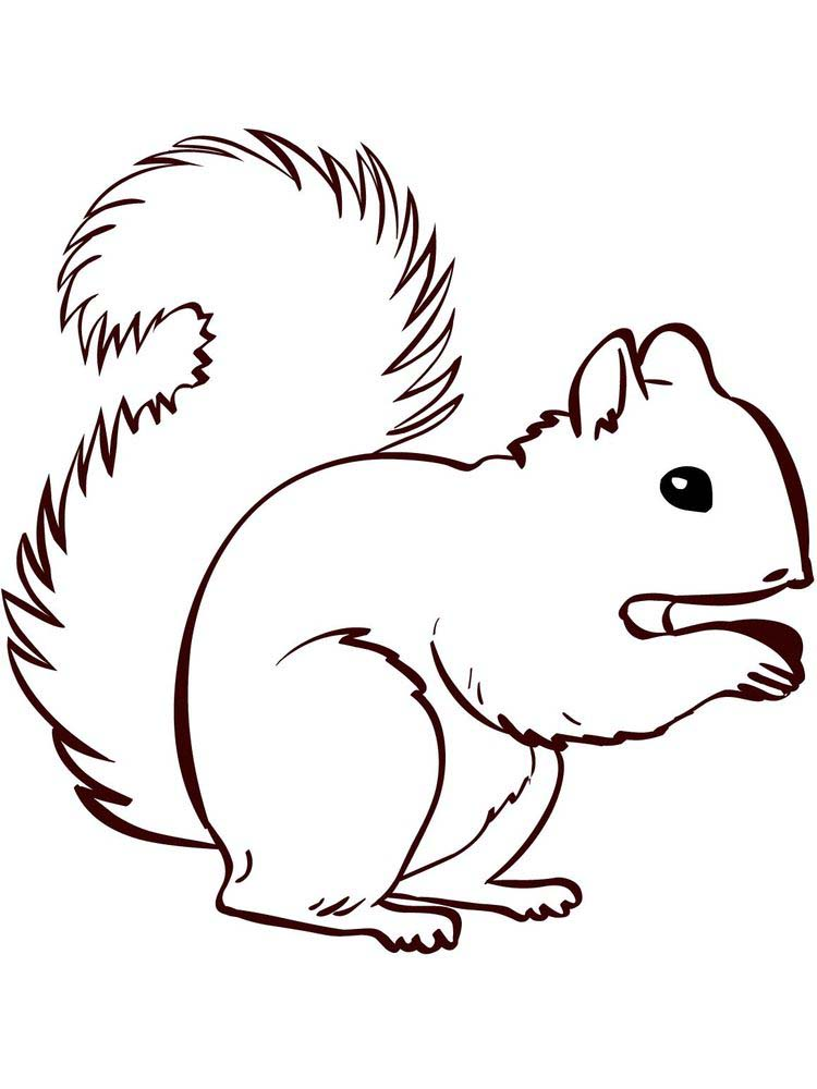 Squirrel Coloring Pages Simple