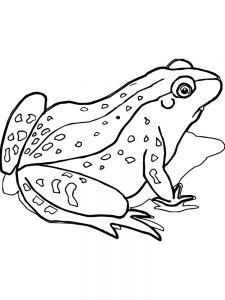 Sweet Frog Coloring Pages