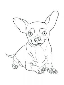 Teacup Chihuahua Coloring Pages