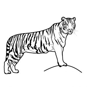 Tiger Coloring Page for Kindergarten