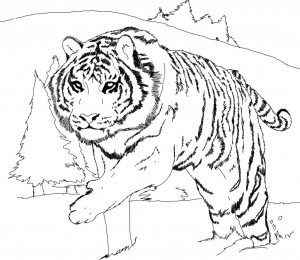 Tiger Coloring Pages For Kids Printable x