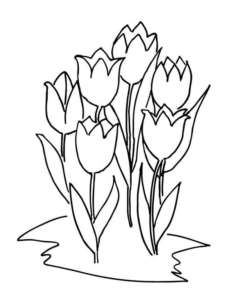 Tulip Coloring Pages For Toddlers