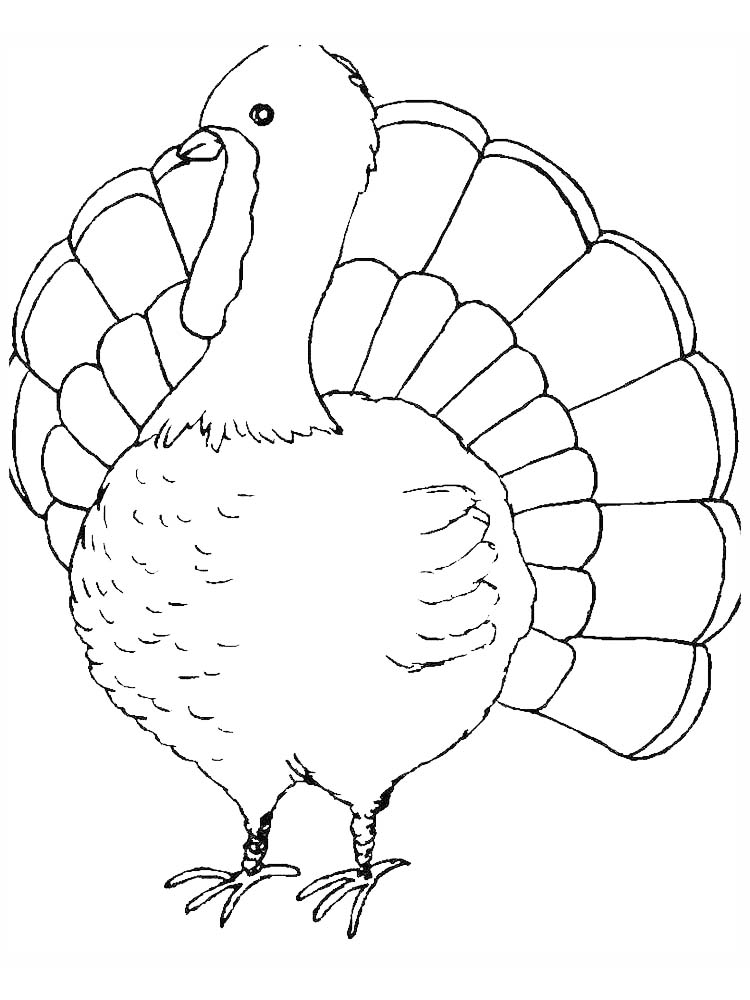 Turkey Bird Coloring Pages