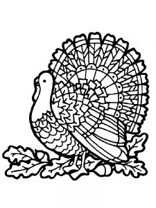 Turkey Coloring Pages By Numbers
