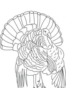 Turkey Coloring Pages For Toddlers