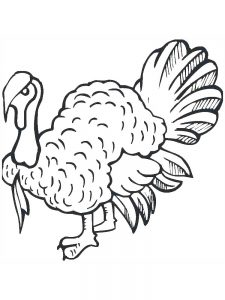 Turkey Coloring Pages Free Printable
