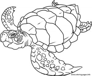 Turtle S Of Sea Animals Coloring Pages Printable