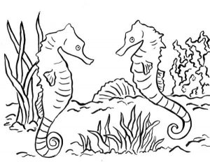 Two seahorse coloring pages