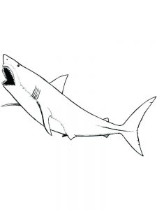 Whale And Shark Coloring Pages