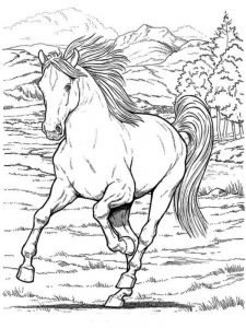 Wild Horse Coloring
